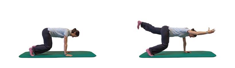4-Füßler-Stand auf Füße und Hände stützen mit diagonaler Arm-/ Beinstreckung